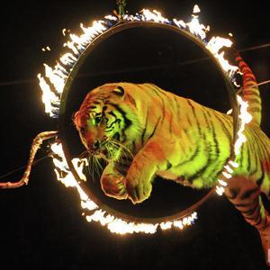 Цирки Нижнего Новгорода