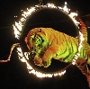 Цирки в Нижнем Новгороде